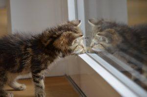 Katze vor Fensterscheibe