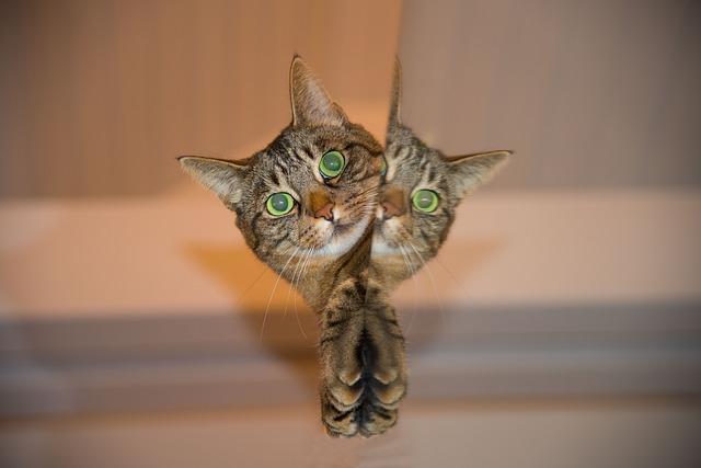 Katze vor dem Spiegel