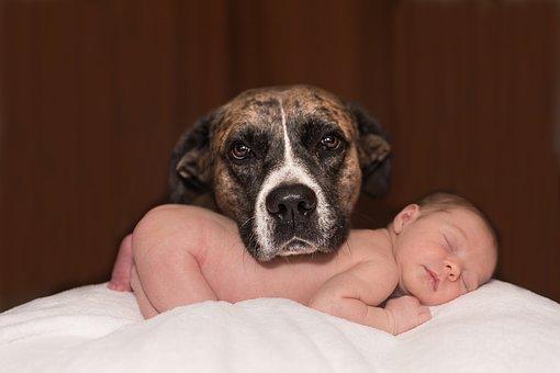 Hund auf Baby