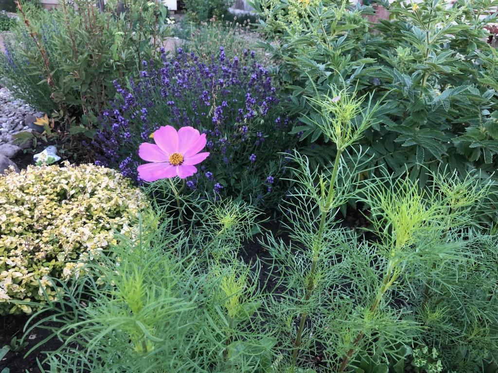 Parin Blume