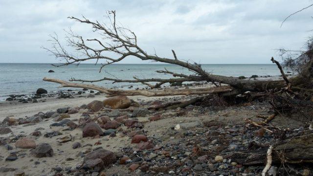 Strand mit abgestorbenem Baumstamm
